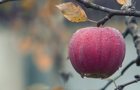 Diagnose pest and disease problems with fruit trees and bushes.