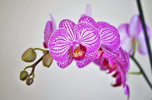 Diagnose orchid plant problems and improve orchid care