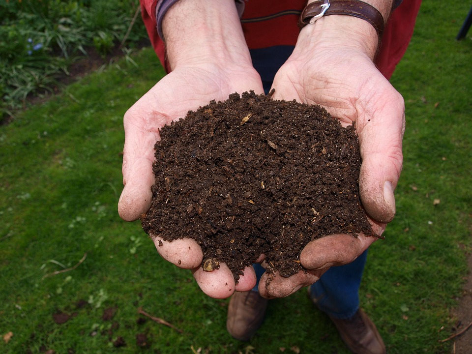 Learn which plants will grow in your soil
