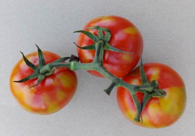 Gardening News: