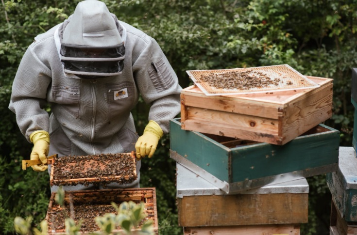 Beckham, Beyonce, Ed Sheeran and even the Pope hooked on Beekeeping