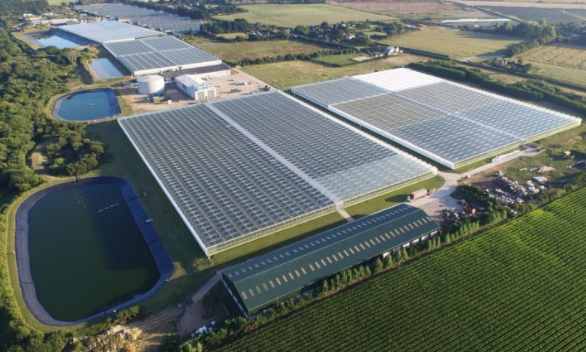 Gardening News: APS Group to build new greenhouse