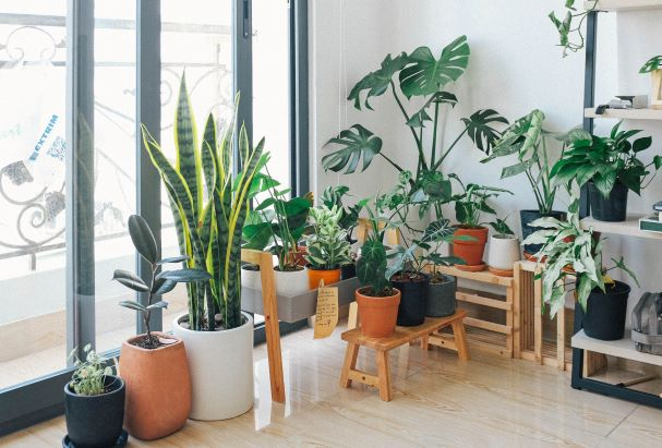 The Most Plant-Obsessed City