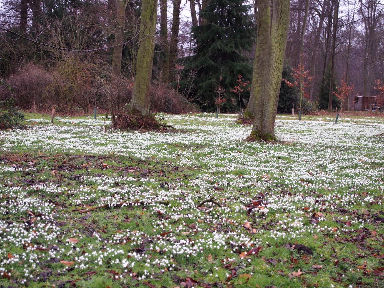 Gardening News: Snowdrop gardens
