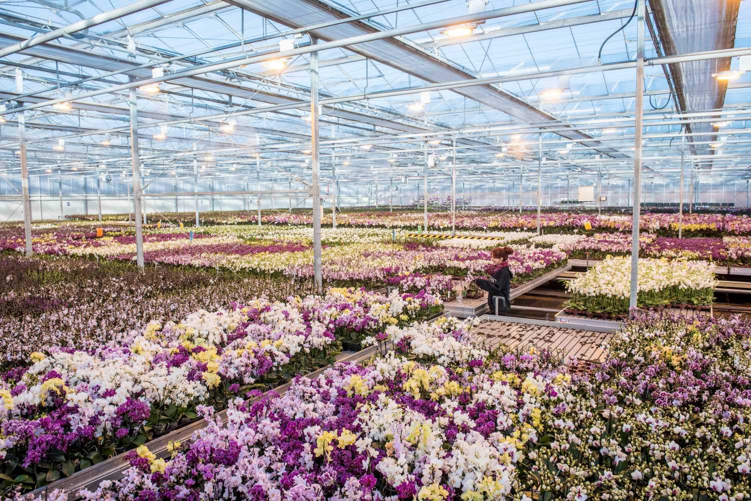 BEHIND THE PLANTS: Where Your Orchids Come From