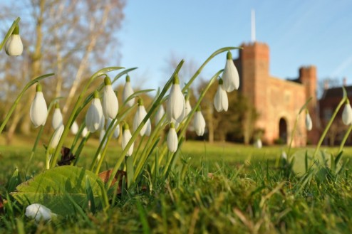 Snowdrops at Hodsock