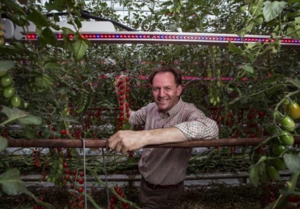 Asda stocks year-round British tomatoes
