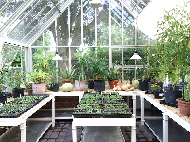 Image for Winter Greenhouse Growing