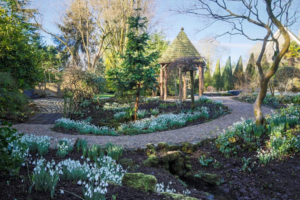 Gardening News: Snowdrops on show at York Gate Garden