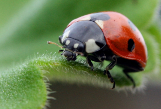 USDA invests $7.6M for research on pests