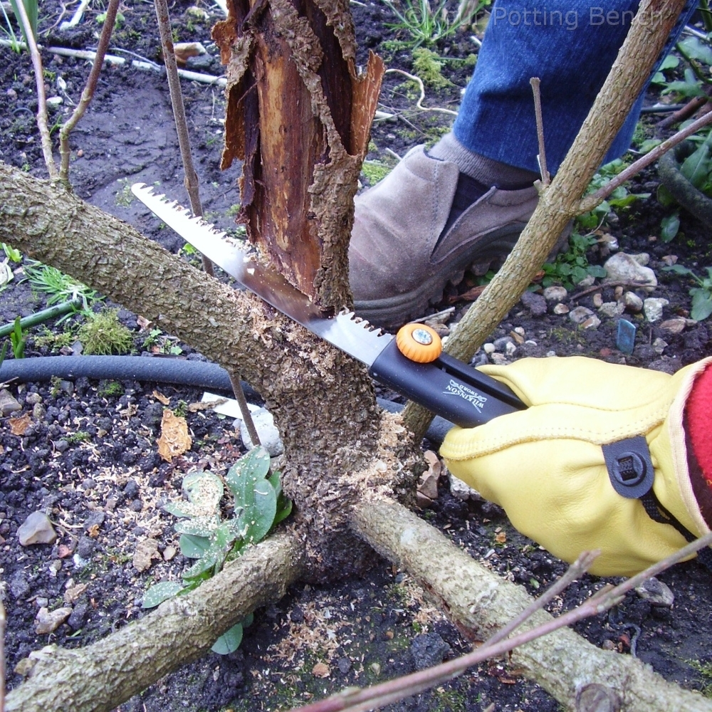How to garden: How to Prune