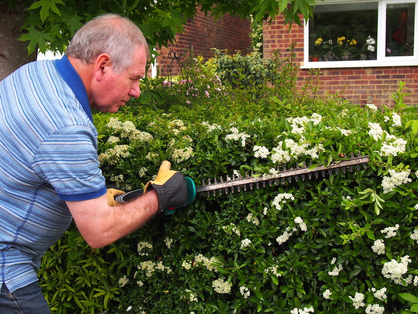 Step 1 of Hedge Trimming