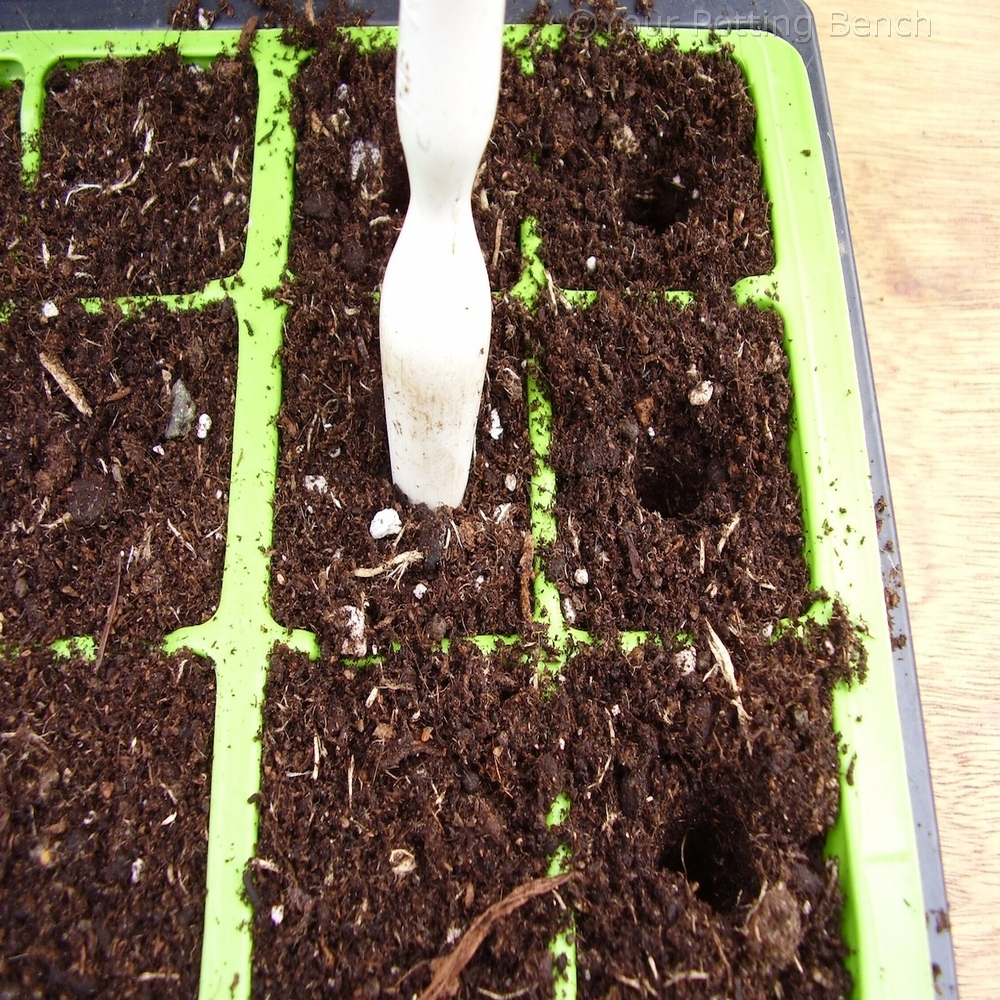 Image of How to sow large seed