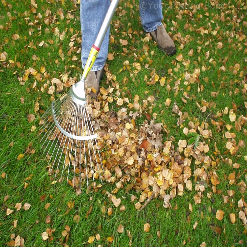Step 1 of How to Make Leaf Mould