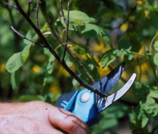 Step 1 of How to: Maintenance Pruning