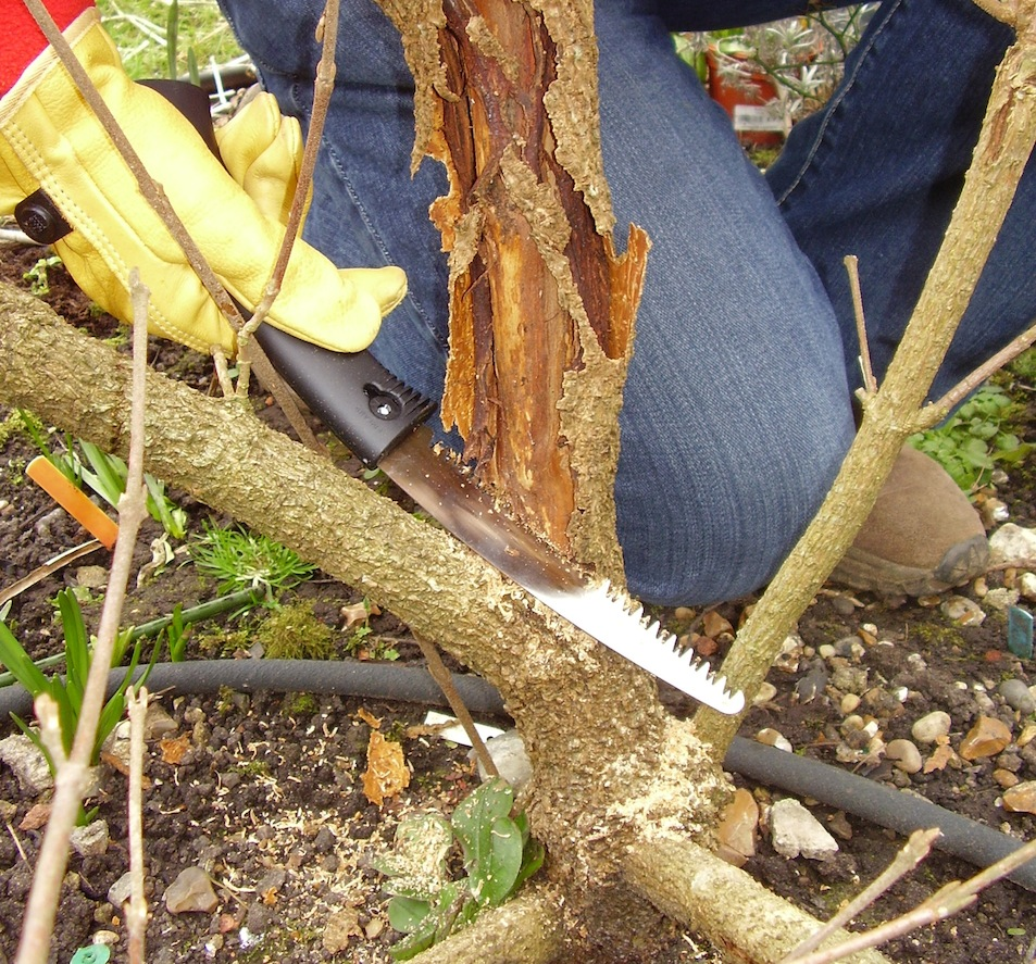 Step 3 of 4How to: Maintenance Pruning