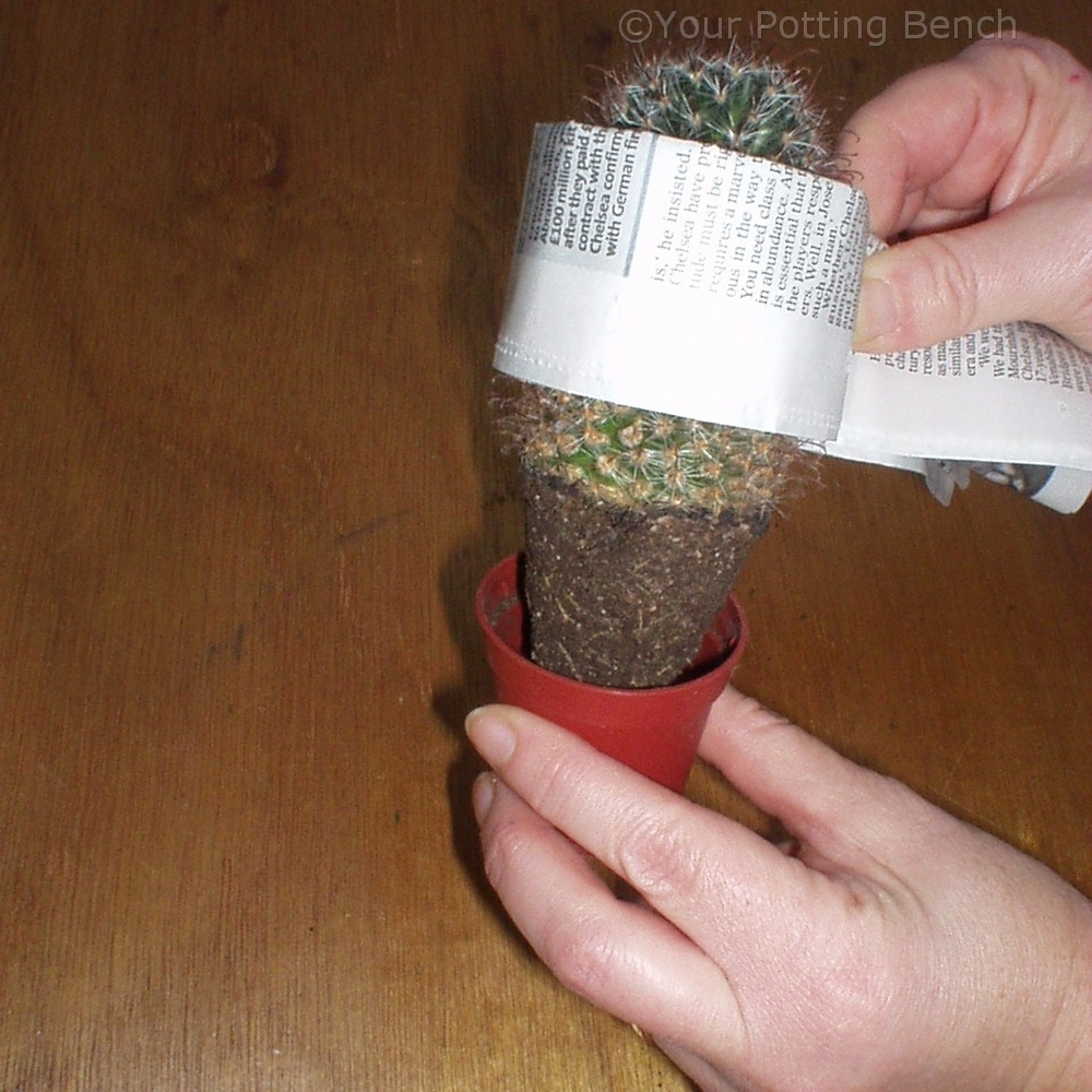 Step 2 of How to re-pot a cactus