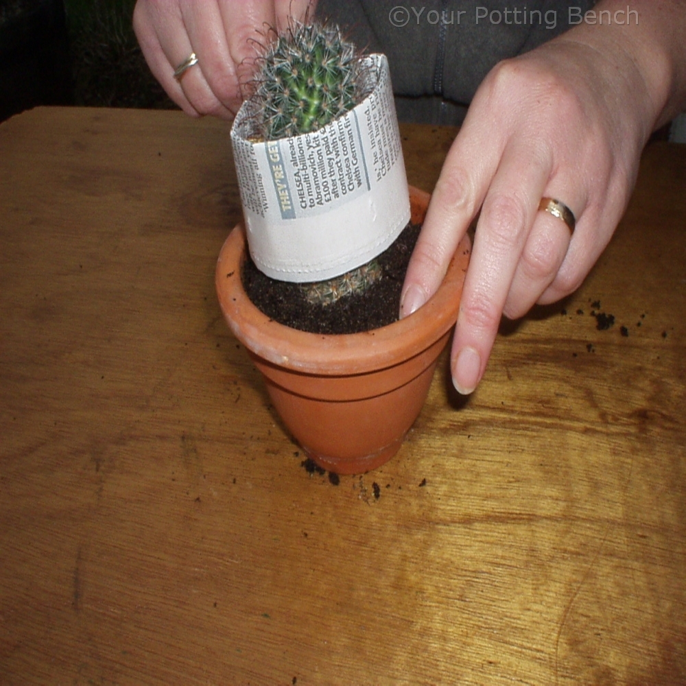 Step 3 of How to re-pot a cactus