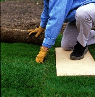 Step 4 of How to turf a lawn