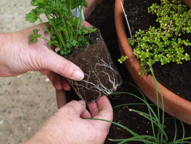 Step 4 of How to make a Herb Planter
